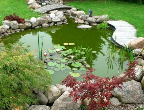 5 Unique Hardscape and Water Feature Options