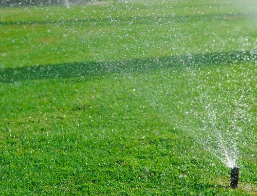 Dry Lawns and Sprinkler Systems- The Benefits