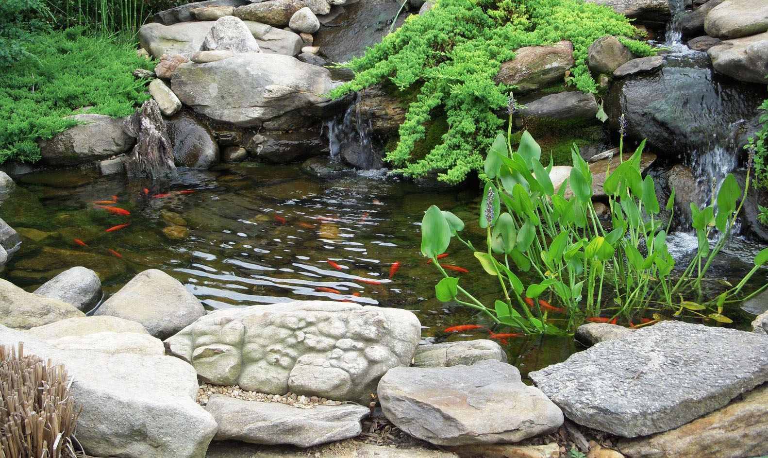 Landscaping info archives huskie z landscaping for Fish pond rocks