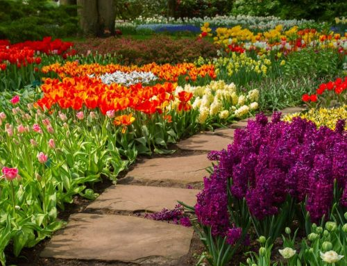 Landscapes and Hardscapes – The Perfect Hybrid