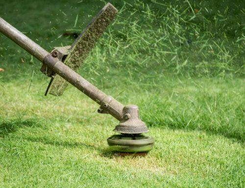 Summer Lawn and Landscape Maintenance