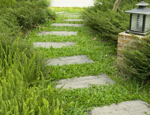 5 Landscaping Ideas on A Budget!