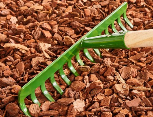 5 Ways to Protect Your Landscapes This Fall!