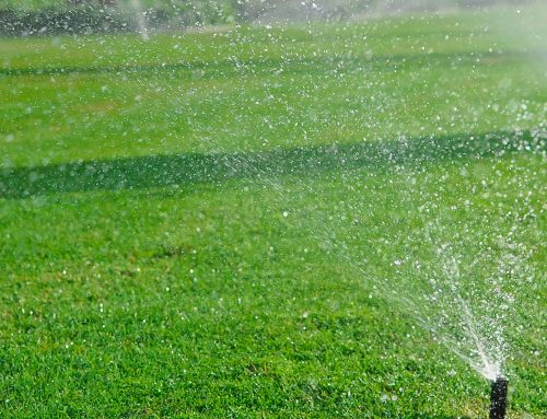 Summer Landscaping Issues – Why You Should Have a Sprinkler System!