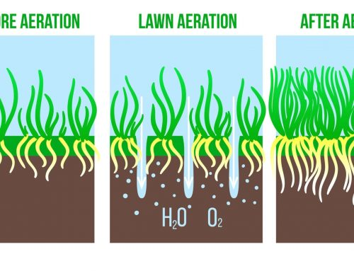 What is Lawn Aeration, and Will It Be Beneficial For Your Property?