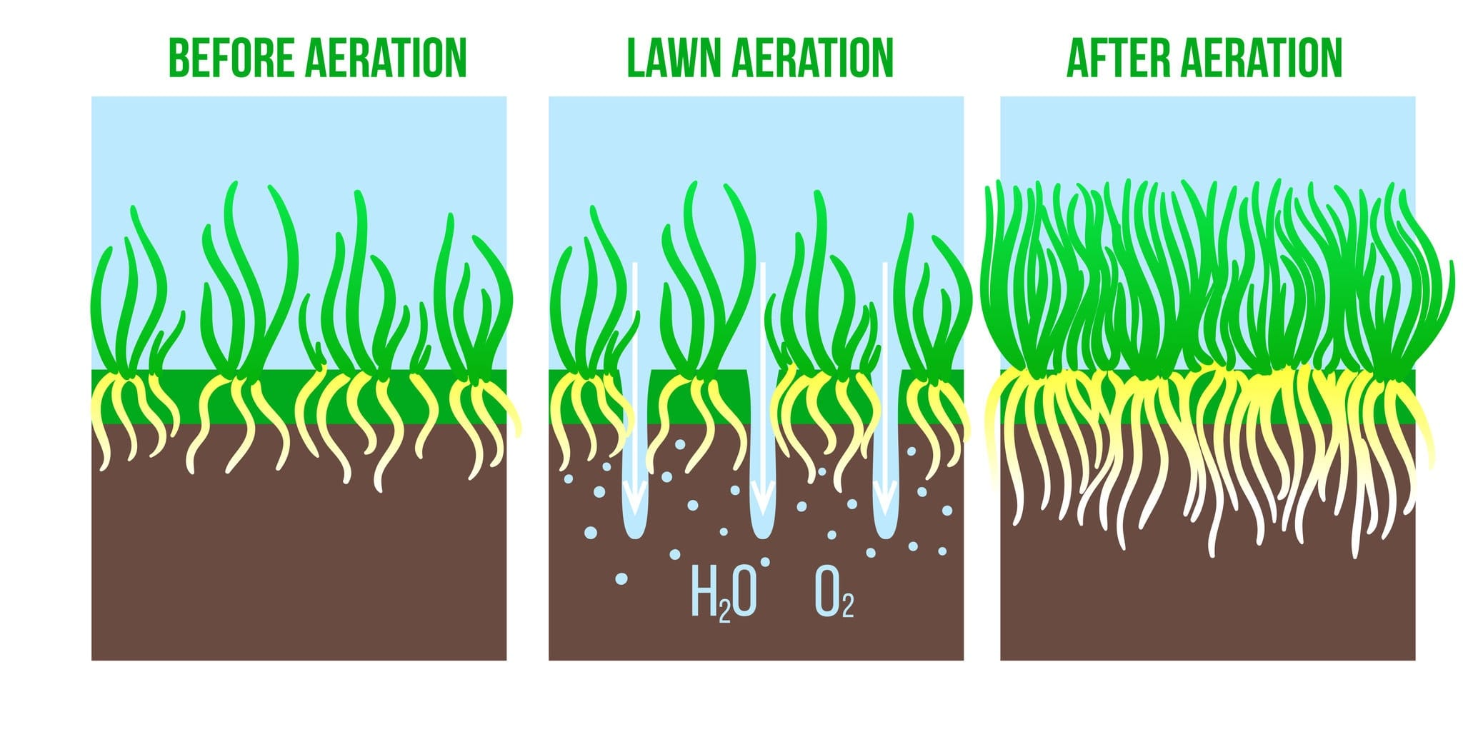 Lawn aeration graphic