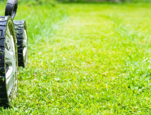 Lawn and Landscape Maintenance is Crucial During the Summer