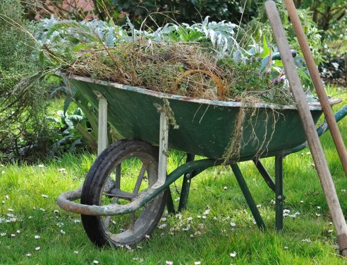 Landscapes and Lawns – All You Need to Know About Spring Cleaning