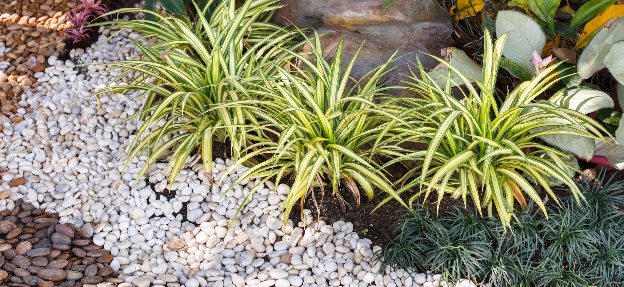 Landscaping combinations of plant and grass