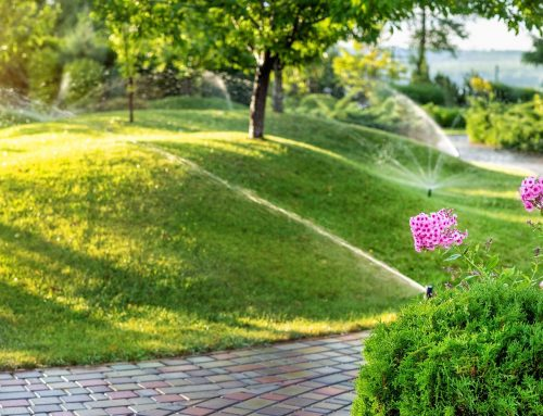 Lawn Not Looking as Lush as It Should? We Have Answers!