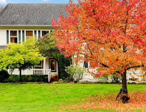 Fall Landscape Preparations