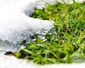 Melting snow and growing green grass