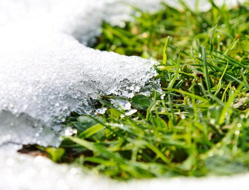Winter Landscape Clean Up and Your Property