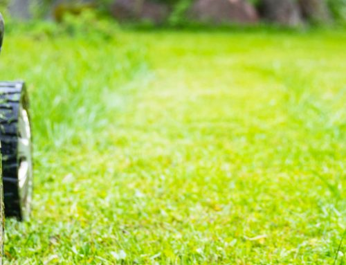 Spring Lawn Care and Its Importance