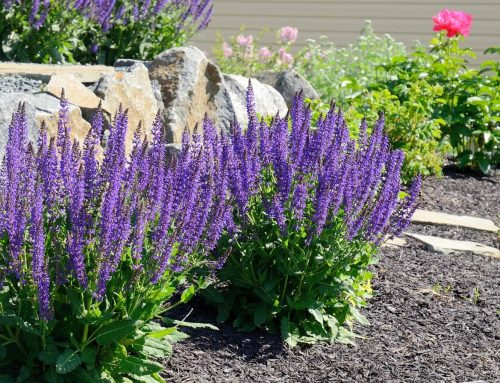Why Should You Choose A Professional Landscaping Company?