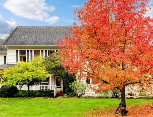 Fall Landscape Maintenance